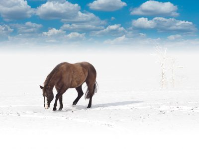 סוס בחלום