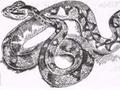הנחש לכזיס