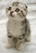 הסימבול חתול