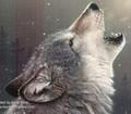 הסימבול - זאב