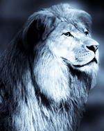 חלום על אריה