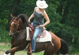 לעלות על הסוס הוא ביטוי וסימבול, המייצג הצלחה. הרכיבה עליו הנה סימבול המייצג הישג, ריסון עצמי ומימוש הפוטנציאל.